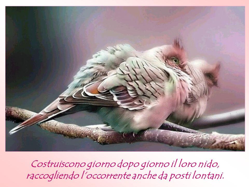Hai mai fatto attenzione al comportamento degli uccelli di f ronte alle avveristà?