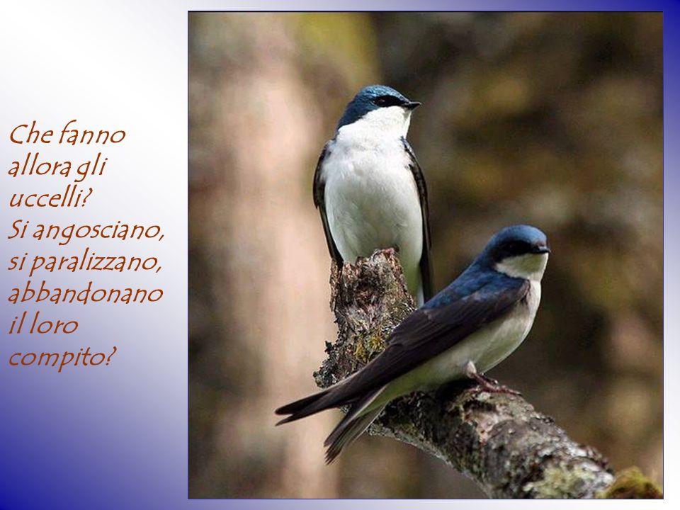 Che fanno allora gli uccelli? Si angosciano, si paralizzano, abbandonano il loro compito?