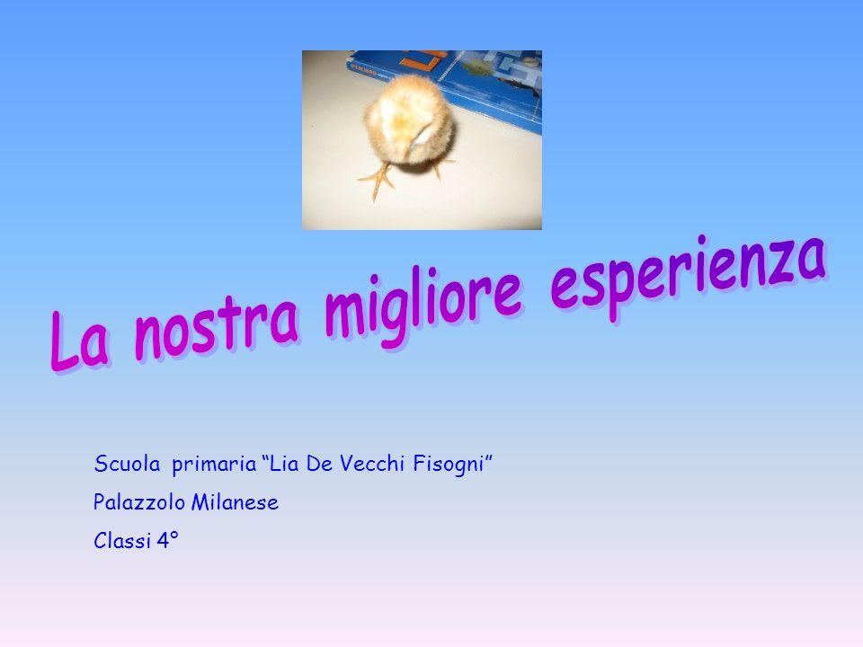 Scuola primaria Lia De Vecchi Fisogni Palazzolo Milanese Classi 4°