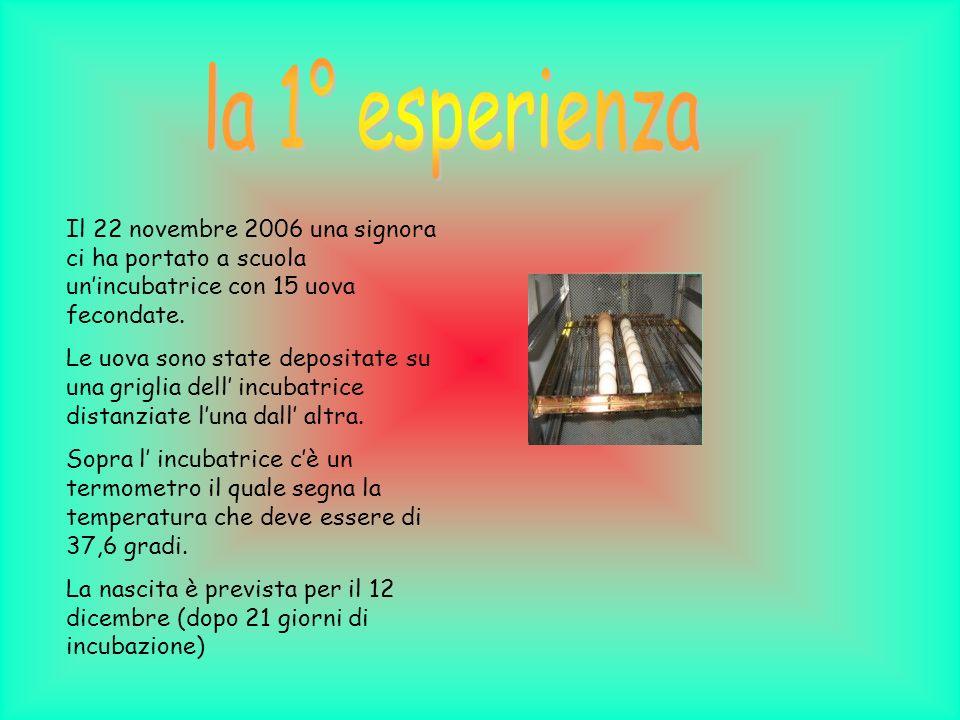 Il 22 novembre 2006 una signora ci ha portato a scuola unincubatrice con 15 uova fecondate.