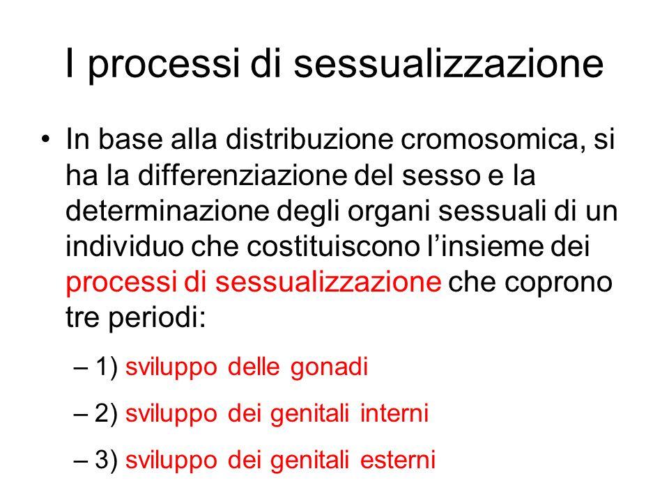 I processi di sessualizzazione In base alla distribuzione cromosomica, si ha la differenziazione del sesso e la determinazione degli organi sessuali d