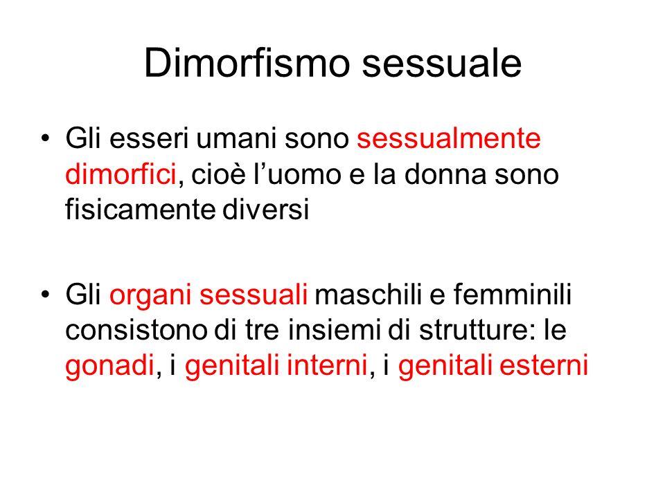 Dimorfismo sessuale Gli esseri umani sono sessualmente dimorfici, cioè luomo e la donna sono fisicamente diversi Gli organi sessuali maschili e femmin