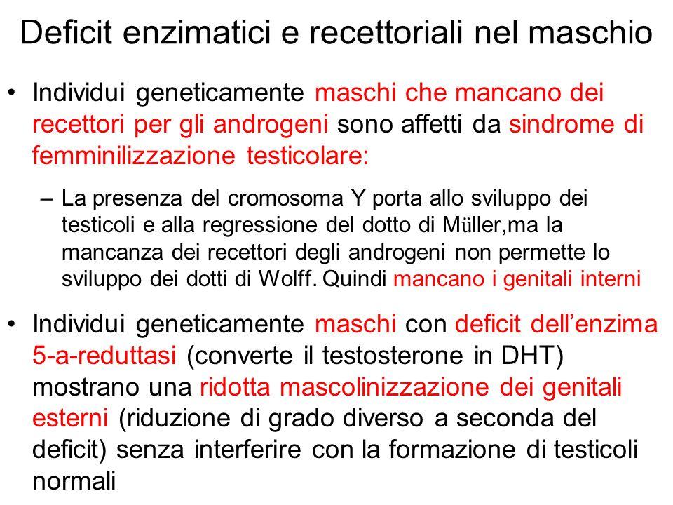 Deficit enzimatici e recettoriali nel maschio Individui geneticamente maschi che mancano dei recettori per gli androgeni sono affetti da sindrome di f