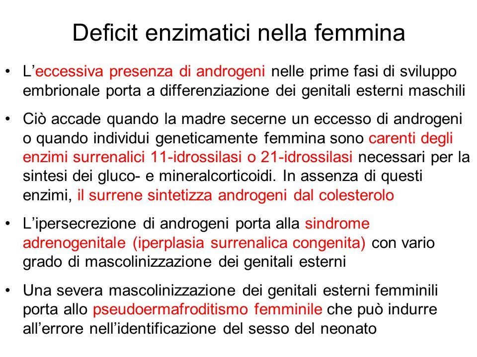 Deficit enzimatici nella femmina Leccessiva presenza di androgeni nelle prime fasi di sviluppo embrionale porta a differenziazione dei genitali estern