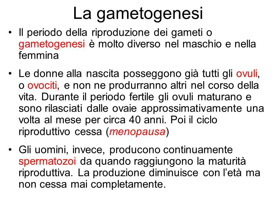 La gametogenesi Il periodo della riproduzione dei gameti o gametogenesi è molto diverso nel maschio e nella femmina Le donne alla nascita posseggono g