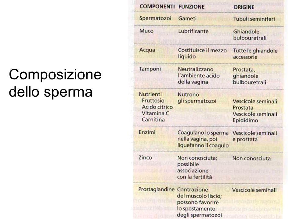 Composizione dello sperma