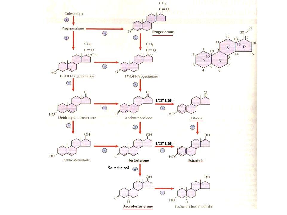 aromatasi 5α-reduttasi