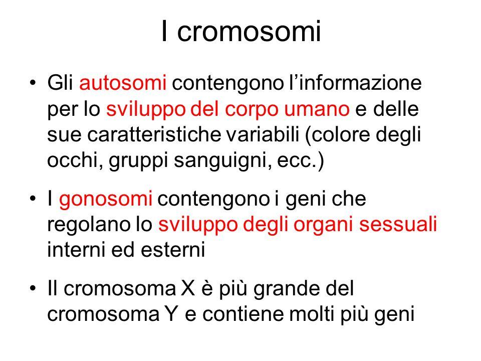 I cromosomi Gli autosomi contengono linformazione per lo sviluppo del corpo umano e delle sue caratteristiche variabili (colore degli occhi, gruppi sa