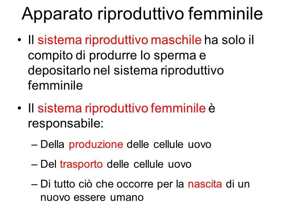 Apparato riproduttivo femminile Il sistema riproduttivo maschile ha solo il compito di produrre lo sperma e depositarlo nel sistema riproduttivo femmi