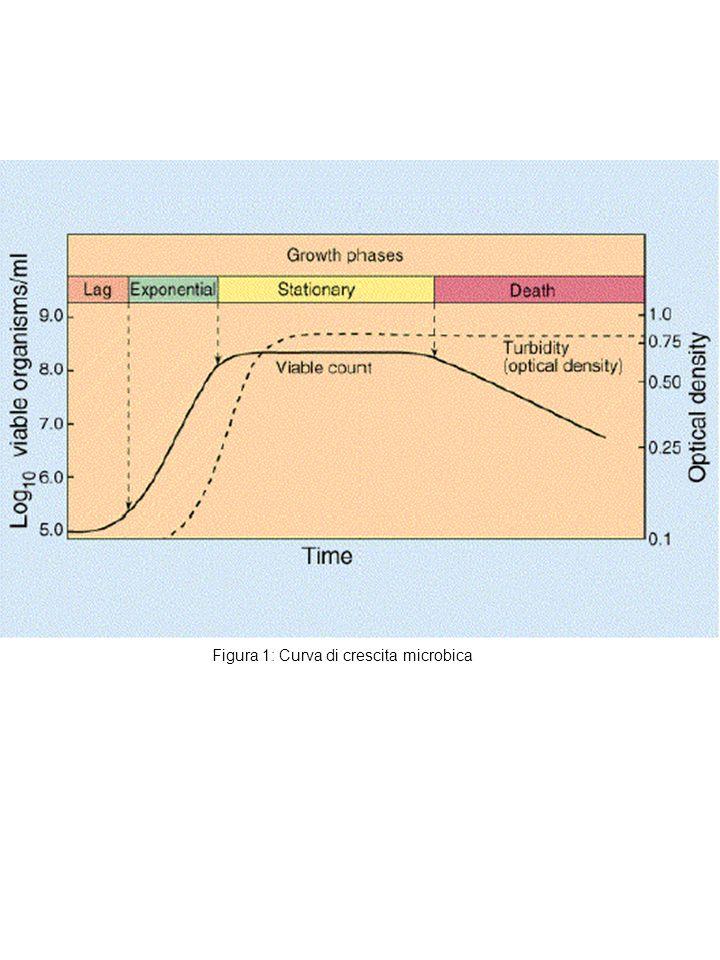 FATTORI CHE INFLUENZANO LA CRESCITA DEI MICRORGANISMI Composizione chimica (presenza di nutrienti come proteine, zuccheri, grassi, vitamine, etc.) Contenuto in acqua (Aw) (la maggior parte ha bisogno di una disponibilità di acqua superiore al 95%) pH neutro e comunque superiore a 4.5 e inferiore a 9 Atmosfera: gli aerobi hanno bisogno di ossigeno, gli anaerobi sono inattivati dallossigeno (Eh) Temperatura: 0-4°C FRIGO (i microrganismi non si riproducono ma rimangono vitali) 15-45°C Temperatura IDEALE per la moltiplicazione dei microrganismi > 60-100°C i microrganismi vengono uccisi ma le spore (Clostridi del botulismo) e alcune tossine (stafilococco aureo) sono termoresistenti e conservano la loro attività Tempo trascorso tra preparazione e consumo (alla temperatura ottimale 20-40°C si dividono ogni 20 minuti circa)