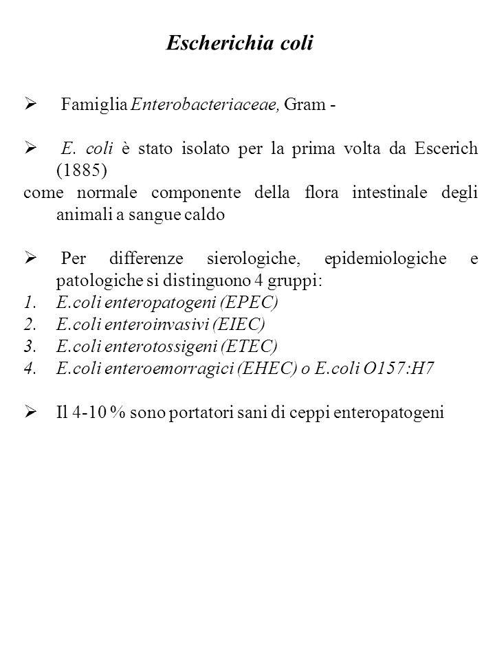 E.coli enteropatogeni (EPEC) Sono causa della gastroenterite infantile o diarrea estiva dei bambini.