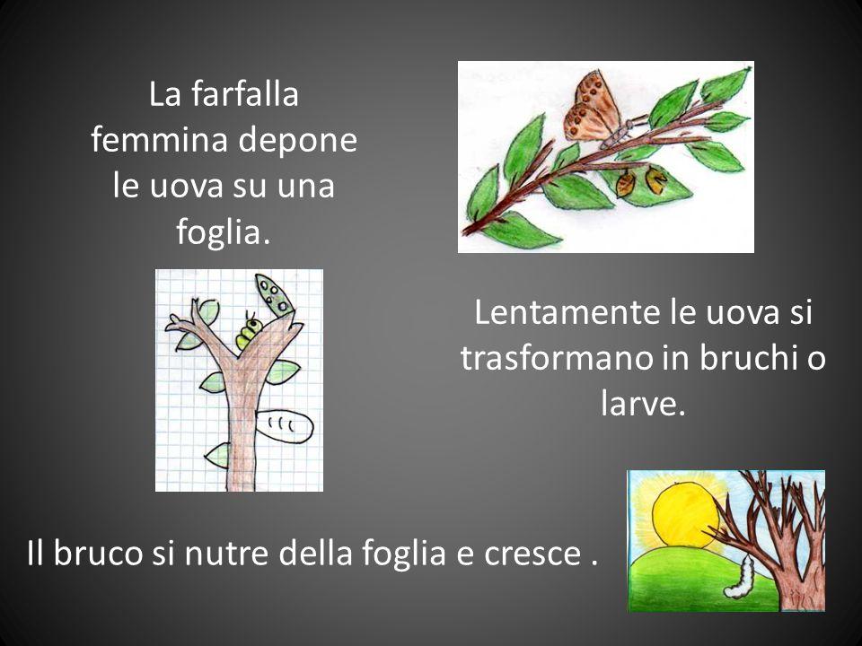 La metamorfosi della farfalla anno scolastico 2009-2010 classi quarte plesso di Pedemonte