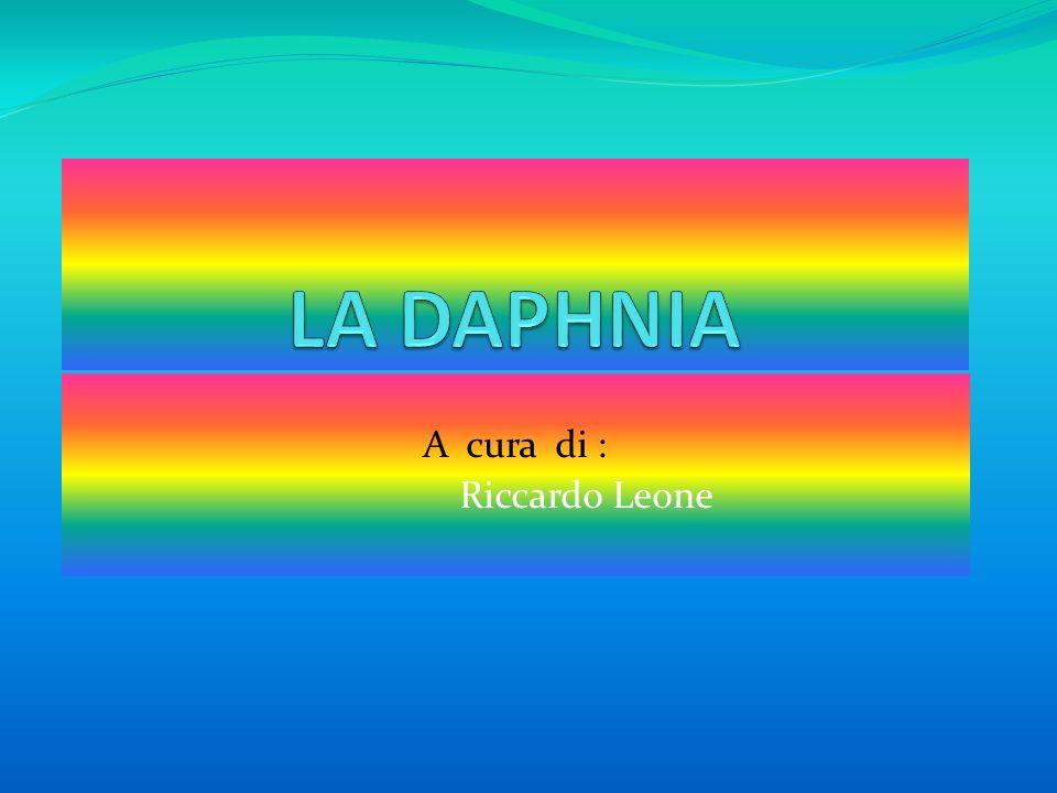 Alcune informazioni sulla Daphnia Daphnia è un genere di piccoli crostacei cladoceri planctonici.