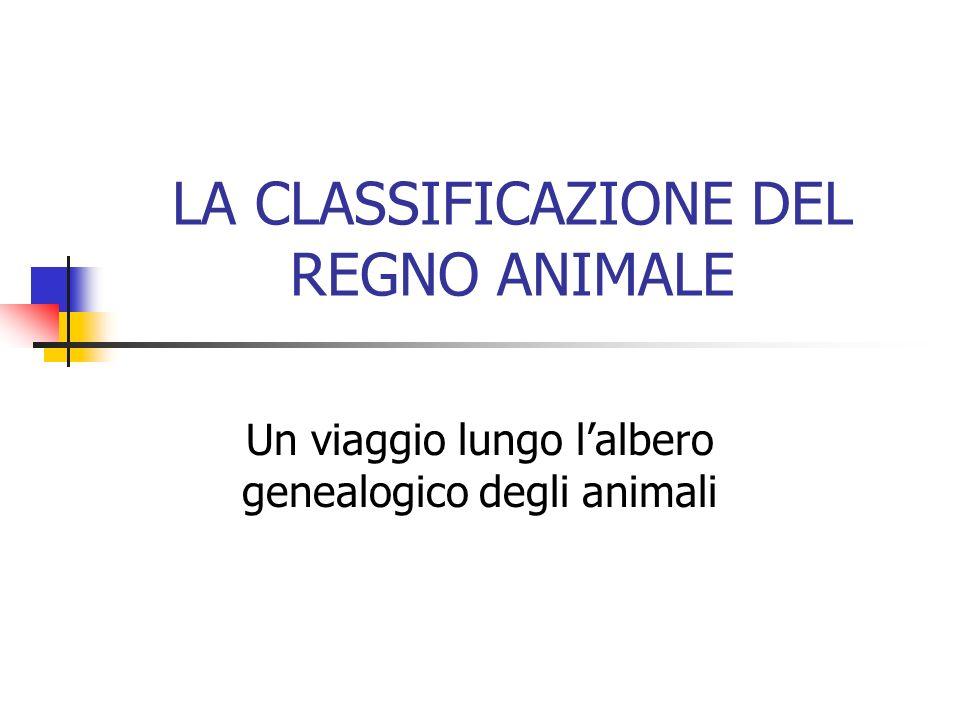 LA CLASSIFICAZIONE DEL REGNO ANIMALE Un viaggio lungo lalbero genealogico degli animali