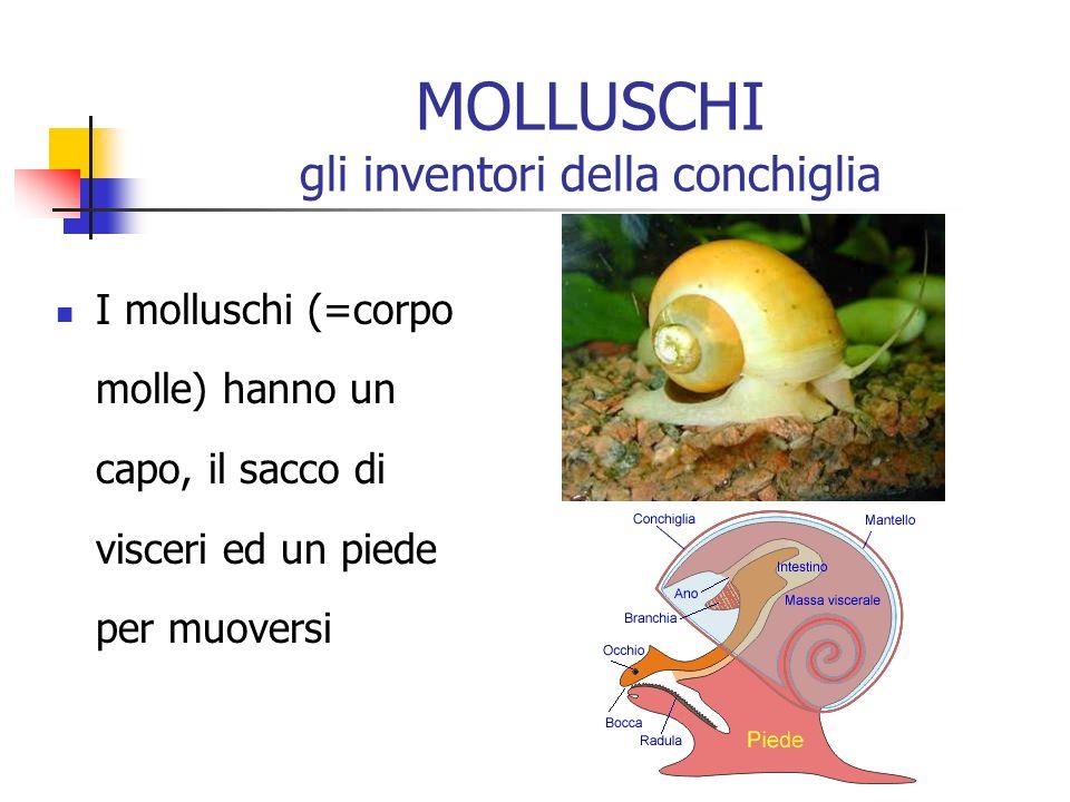 MOLLUSCHI gli inventori della conchiglia I molluschi (=corpo molle) hanno un capo, il sacco di visceri ed un piede per muoversi