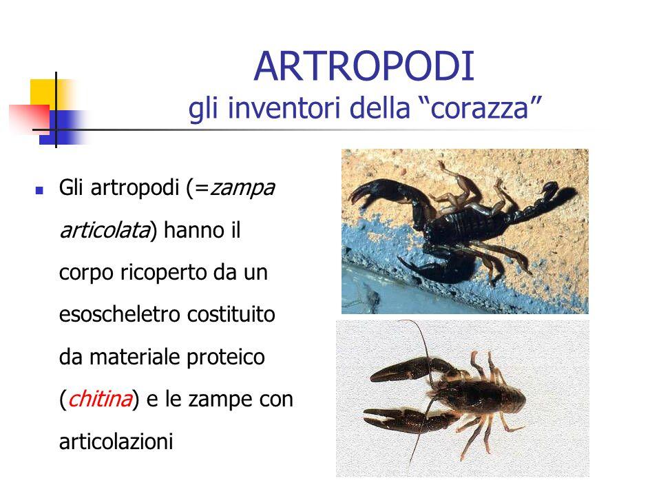 ARTROPODI gli inventori della corazza Gli artropodi (=zampa articolata) hanno il corpo ricoperto da un esoscheletro costituito da materiale proteico (