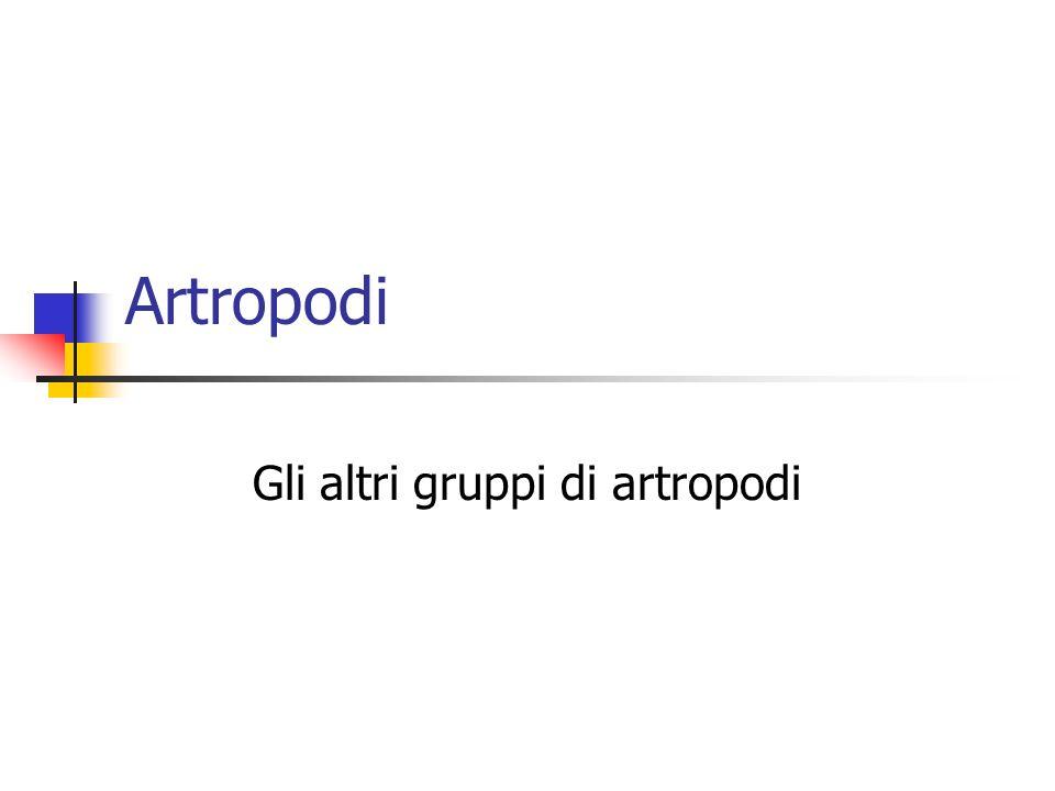 Artropodi Gli altri gruppi di artropodi