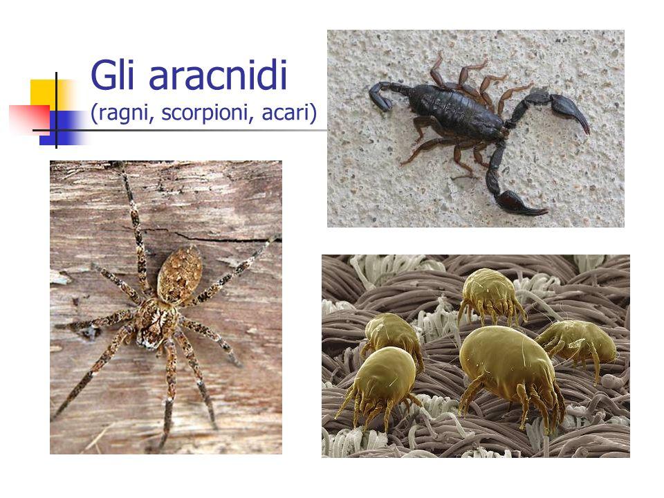 Gli aracnidi (ragni, scorpioni, acari)