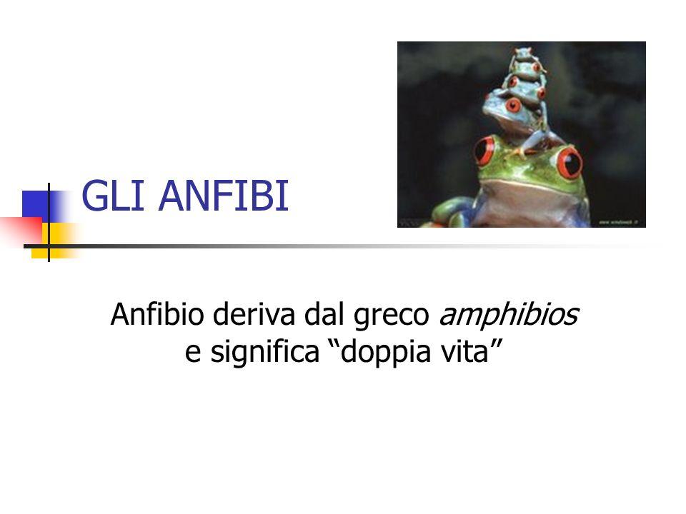 GLI ANFIBI Anfibio deriva dal greco amphibios e significa doppia vita