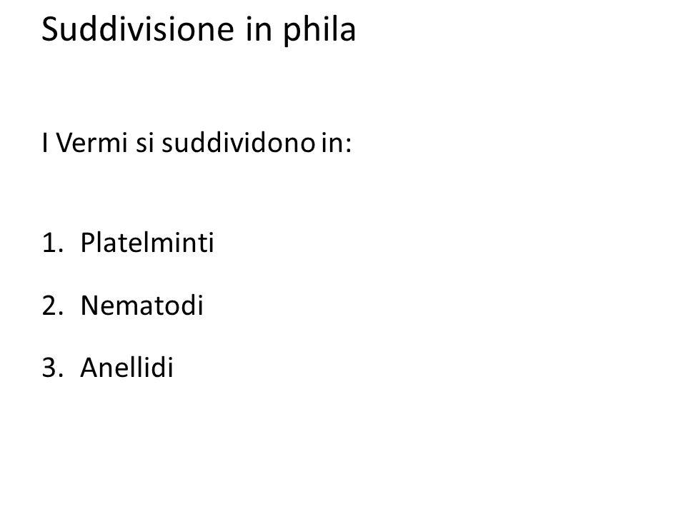 Suddivisione in phila I Vermi si suddividono in: 1.Platelminti 2.Nematodi 3.Anellidi