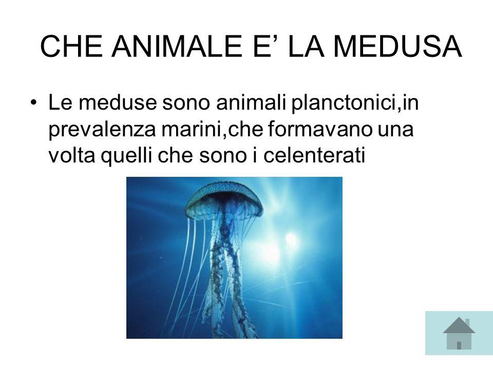 CHE ANIMALE E LA MEDUSA Le meduse sono animali planctonici,in prevalenza marini,che formavano una volta quelli che sono i celenterati