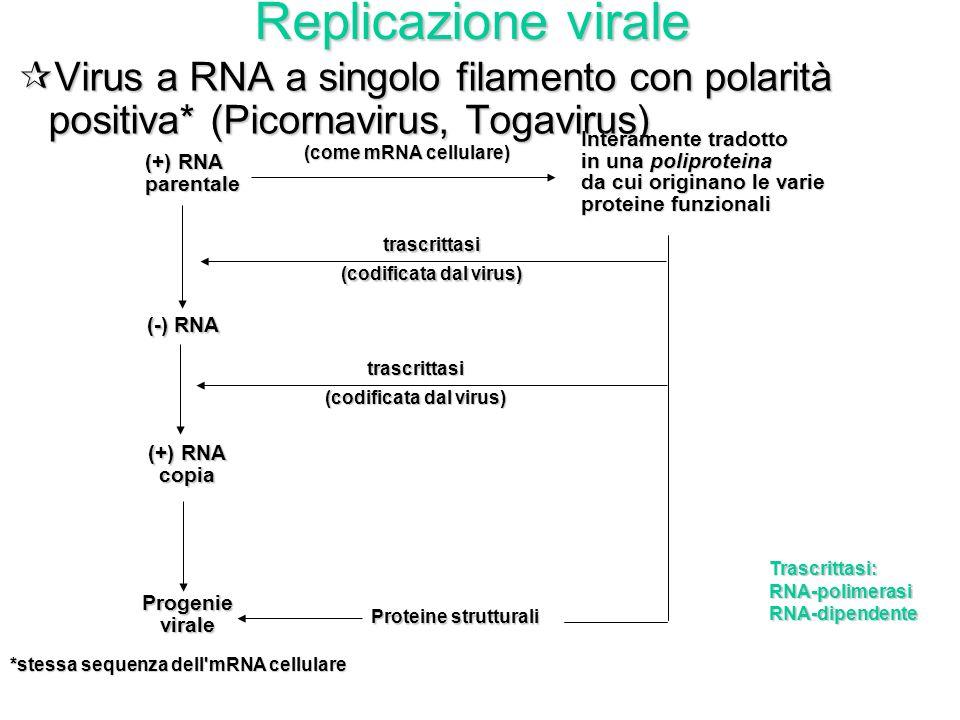Virioni di HIV gemmanti da un linfocita T