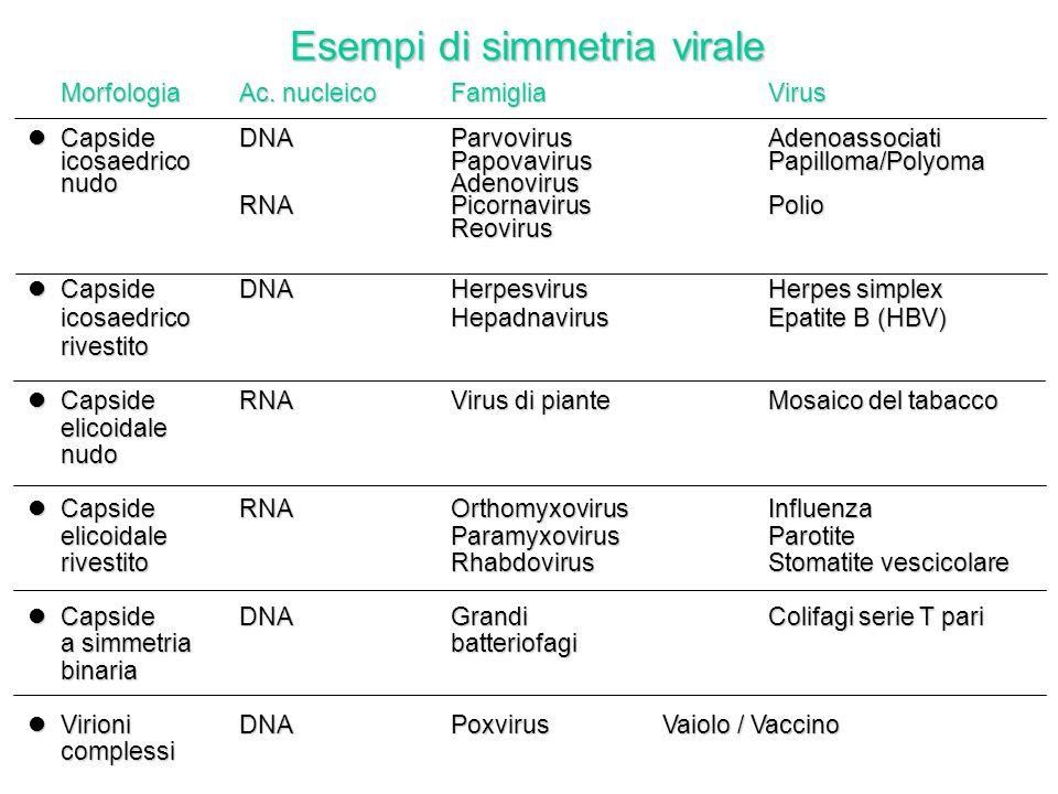 Esempi di simmetria virale MorfologiaAc.nucleicoFamigliaVirus MorfologiaAc.