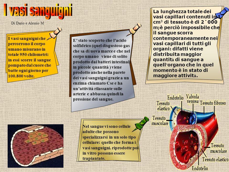 Di Dario e Alessio M Nel sangue vi sono cellule adulte che possono specializzarsi in un solo tipo cellulare: quello che forma i vasi sanguigni. riprod