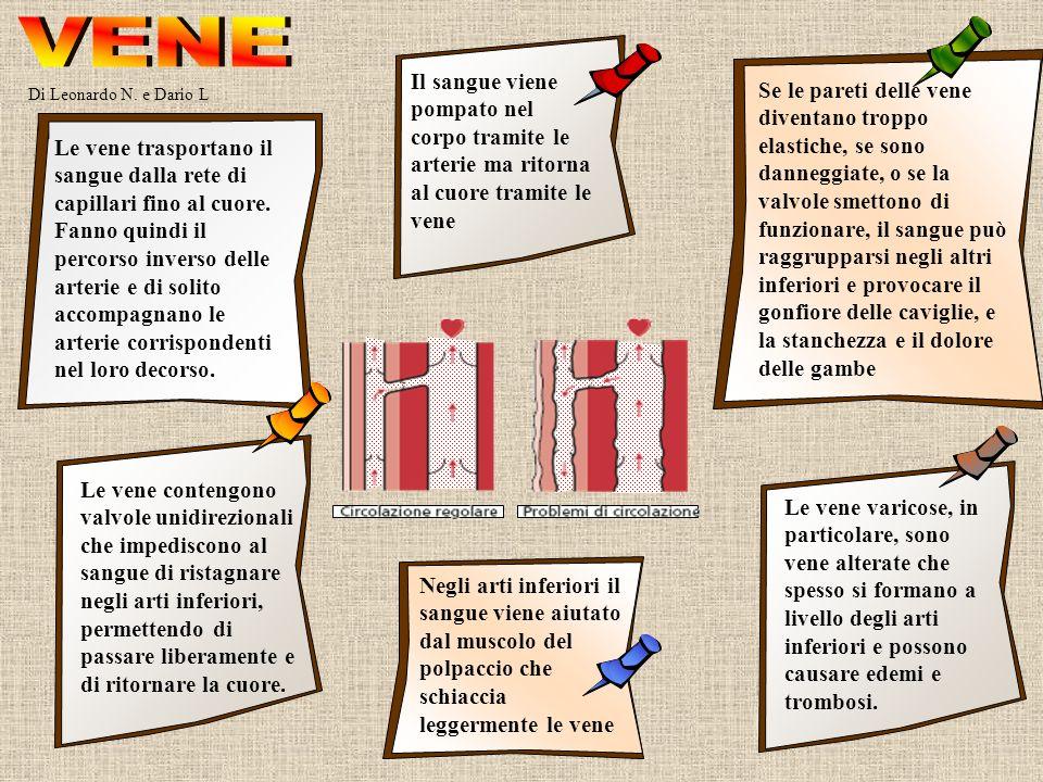 Di Leonardo N. e Dario L Le vene trasportano il sangue dalla rete di capillari fino al cuore. Fanno quindi il percorso inverso delle arterie e di soli