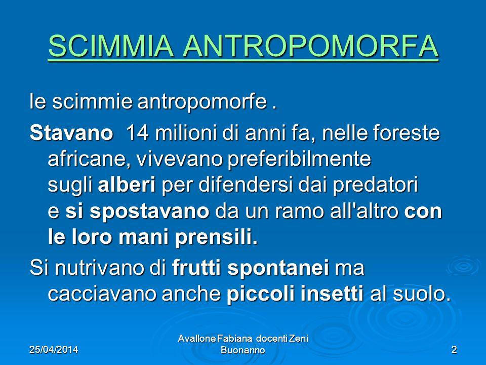 25/04/2014 Avallone Fabiana docenti Zeni Buonanno2 SCIMMIA ANTROPOMORFA SCIMMIA ANTROPOMORFA le scimmie antropomorfe. Stavano 14 milioni di anni fa, n
