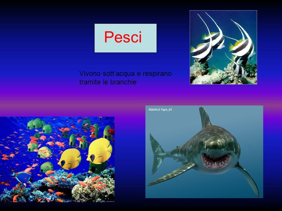 Pesci Vivono sottacqua e respirano tramite le branchie