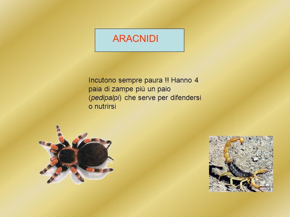 TIPI di ARACNIDI