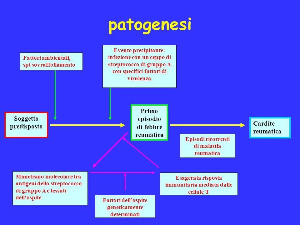 patogenesi Fattori ambientali, spt sovraffollamento Evento precipitante: infezione con un ceppo di streptococco di gruppo A con specifici fattori di v