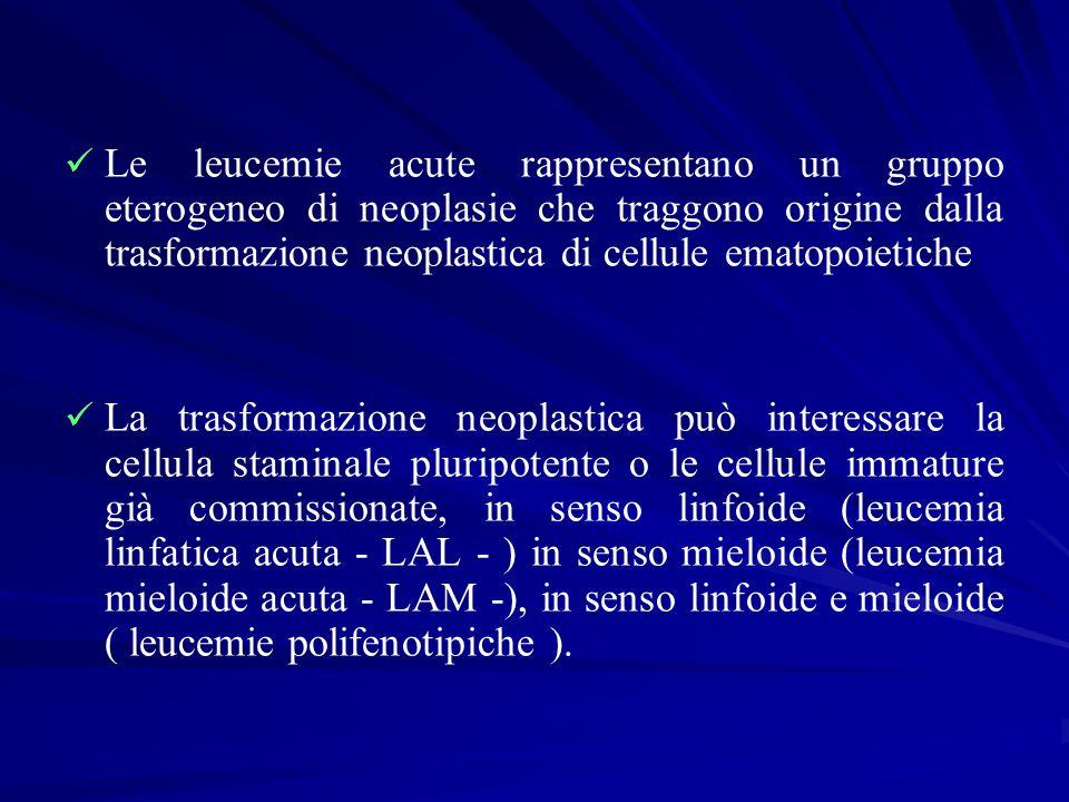 CLASSIFICAZIONE FAB DELLE LEUCEMIE ACUTE MIELOIDI, IMMUNOFENOTIPO E FREQUENZA Varietà Morfologia del midollo osseo Reazionicitochimiche Antigeni cellulari Frequenza % M1 Mieloblastica senza maturazione Mieloblasti > 90 % Mieloperossidasi positiva Sudan B positivo (> 3% dei mieloblasti) CD13, CD31, CD33, CD34, HLA-DR 15-20 M2 Mieloblastica con maturazione Mieloblasti < 90 % Mieloperossidasi positiva Sudan B positivo Esterasi pos NaF resistenti CD13, CD15, CD31, CD33, HLA-DR 25-35 M3 promielocitica tipica Blasti ipergranulati con corpi di Auer Mieloperossidasi positiva Sudan B positivo CD13, CD31, CD33 3-8 M3v promielocitica microgranulare Blasti con fini granuli, bi- o plurilobati Mieloperossidasi positiva Sudan B positivo CD13, CD31, CD33 1