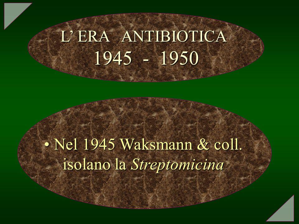 L ERA ANTIBIOTICA 1945 - 1950 Nel 1945 Waksmann & coll. isolano la Streptomicina Nel 1945 Waksmann & coll. isolano la Streptomicina