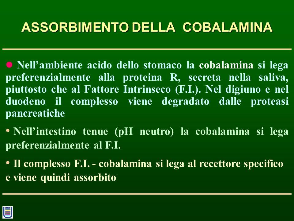 ASSORBIMENTO DELLA COBALAMINA Nellambiente acido dello stomaco la cobalamina si lega preferenzialmente alla proteina R, secreta nella saliva, piuttost