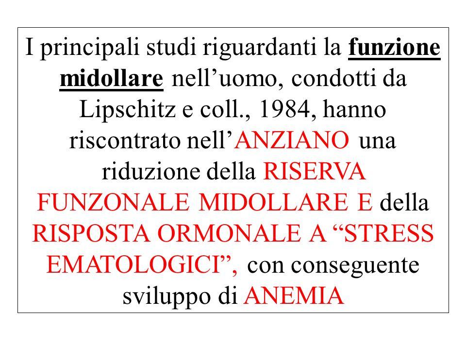 I principali studi riguardanti la funzione midollare nelluomo, condotti da Lipschitz e coll., 1984, hanno riscontrato nellANZIANO una riduzione della