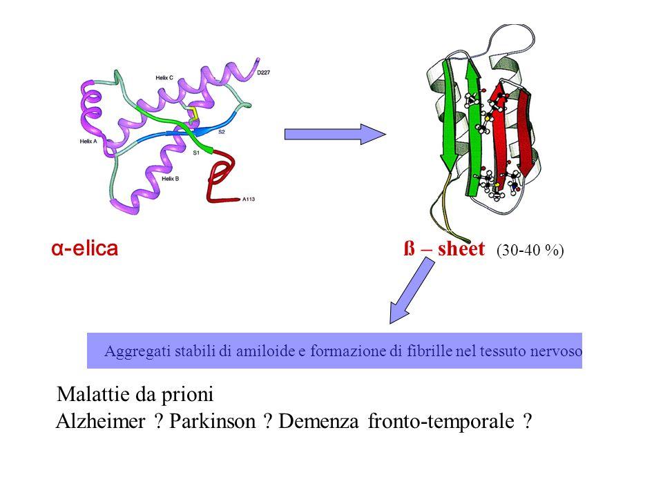 α-elica ß – sheet (30-40 %) Aggregati stabili di amiloide e formazione di fibrille nel tessuto nervoso Malattie da prioni Alzheimer ? Parkinson ? Deme