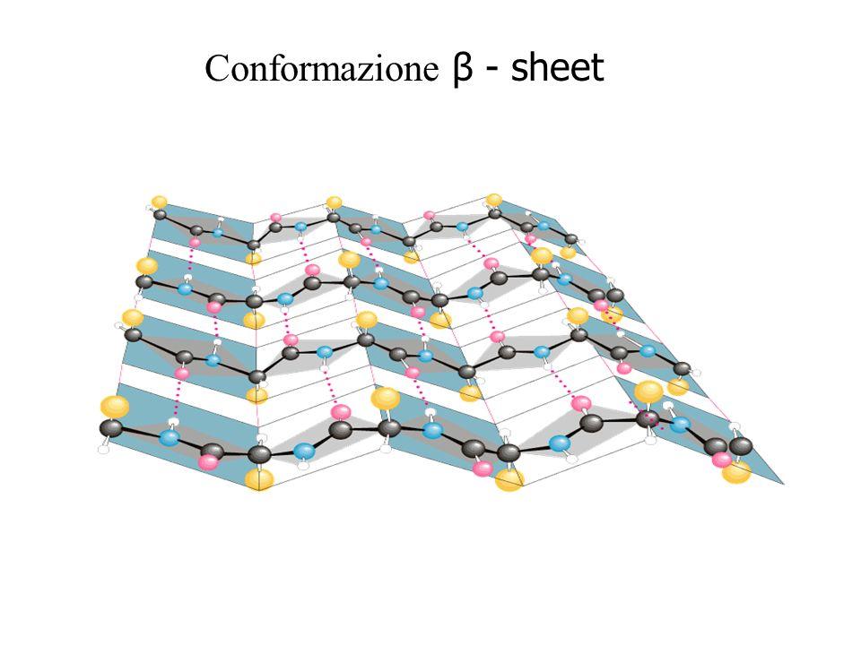 Conformazione β - sheet