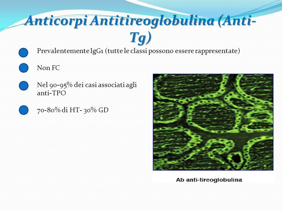 Anticorpi Antitireoglobulina (Anti- Tg) Prevalentemente IgG1 (tutte le classi possono essere rappresentate) Non FC Nel 90-95% dei casi associati agli