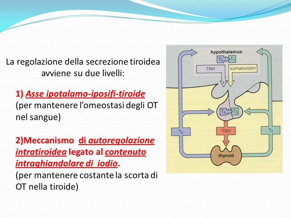 La regolazione della secrezione tiroidea avviene su due livelli: 1) Asse ipotalamo-iposifi-tiroide (per mantenere lomeostasi degli OT nel sangue) 2)Meccanismo di autoregolazione intratiroidea legato al contenuto intraghiandolare di iodio.
