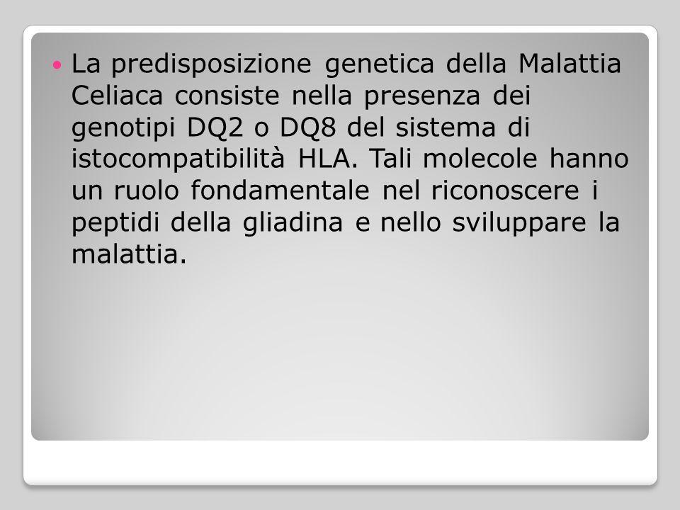 La predisposizione genetica della Malattia Celiaca consiste nella presenza dei genotipi DQ2 o DQ8 del sistema di istocompatibilità HLA. Tali molecole