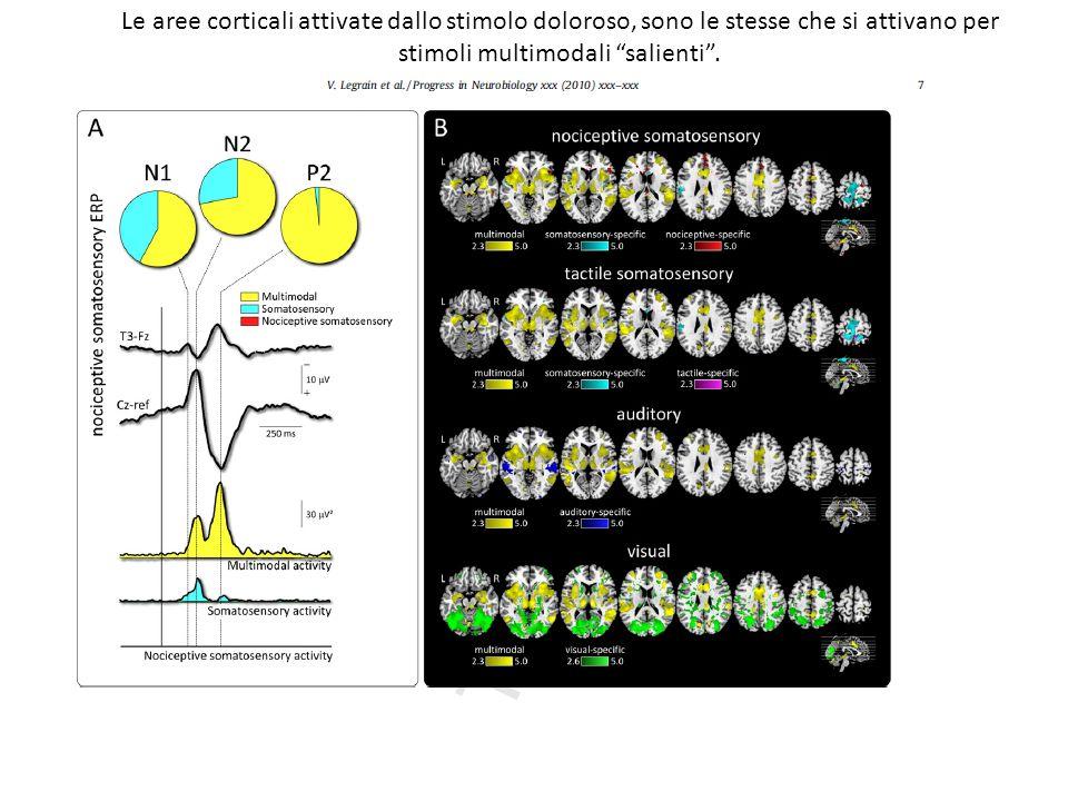 Le aree corticali attivate dallo stimolo doloroso, sono le stesse che si attivano per stimoli multimodali salienti.