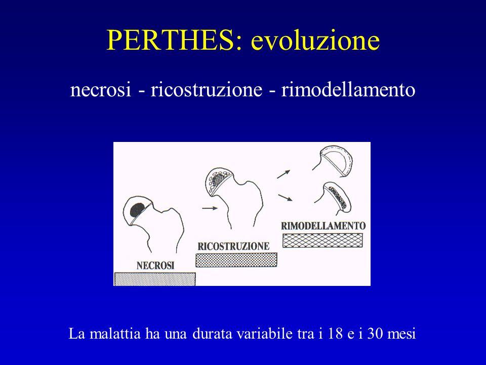 PERTHES: evoluzione necrosi - ricostruzione - rimodellamento La malattia ha una durata variabile tra i 18 e i 30 mesi