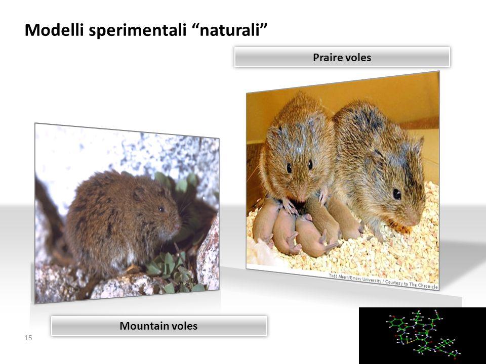 Modelli sperimentali naturali 15 Praire voles Mountain voles