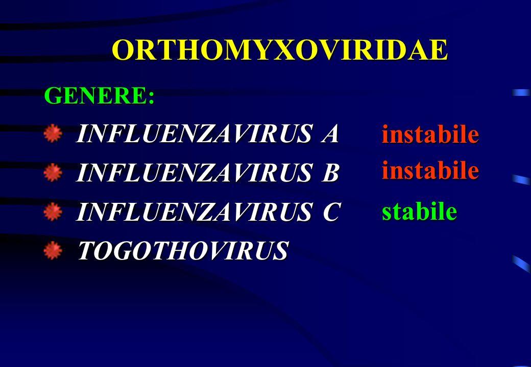 ORTHOMYXOVIRIDAE GENERE: INFLUENZAVIRUS A INFLUENZAVIRUS A INFLUENZAVIRUS B INFLUENZAVIRUS B INFLUENZAVIRUS C INFLUENZAVIRUS C TOGOTHOVIRUS TOGOTHOVIR