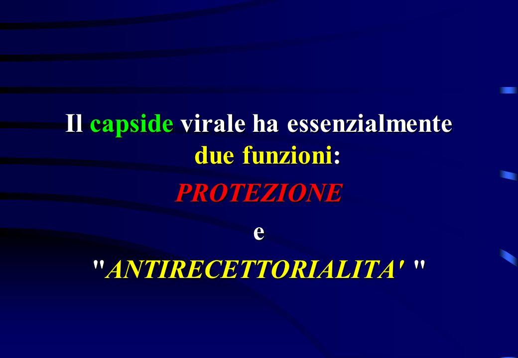 Il capside virale ha essenzialmente due funzioni: PROTEZIONEe