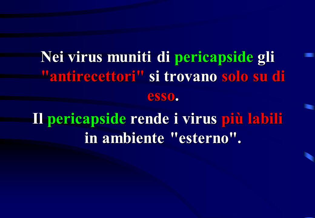 Nei virus muniti di pericapside gli