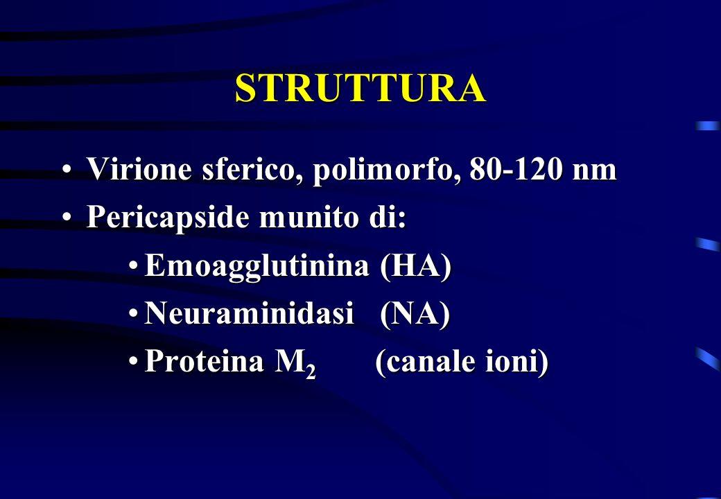 STRUTTURA Virione sferico, polimorfo, 80-120 nmVirione sferico, polimorfo, 80-120 nm Pericapside munito di:Pericapside munito di: Emoagglutinina (HA)E