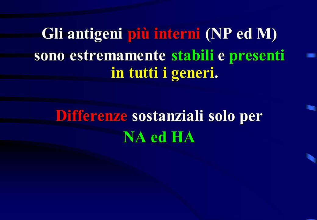 Gli antigeni più interni (NP ed M) sono estremamente stabili e presenti in tutti i generi. Differenze sostanziali solo per NA ed HA